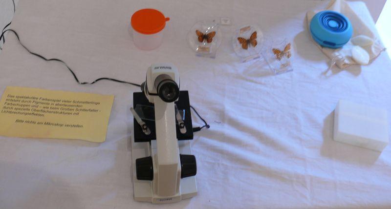 140927_wurzelkinder_schmetterlinge_mikroskop