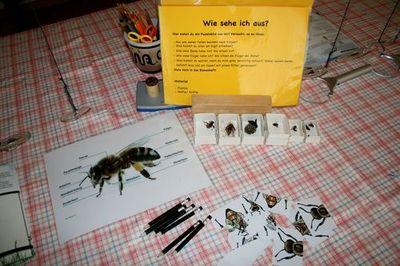 Workshop-Bienen