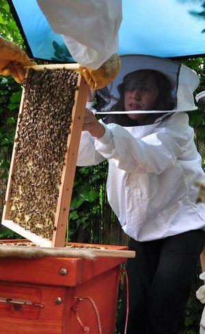 Bienen zeigen